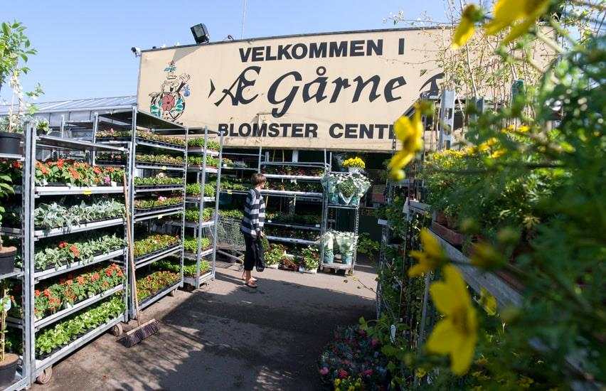A lady looks at plants outside Æ Gårne garden centre